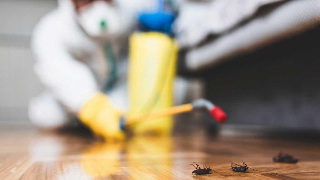 Proliferación de plagas por la cuarentena